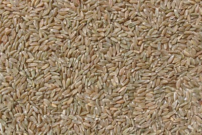 Grünkern, a popular German snack, are ordinary spelt grains, which are harvested half-ripe and artificially dried immediately afterwards.