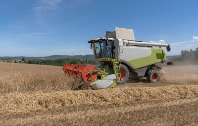 Depending on the altitude, spelt is harvested in the summer months, between the end of July and the end of August. It is important to thresh the ears slowly...